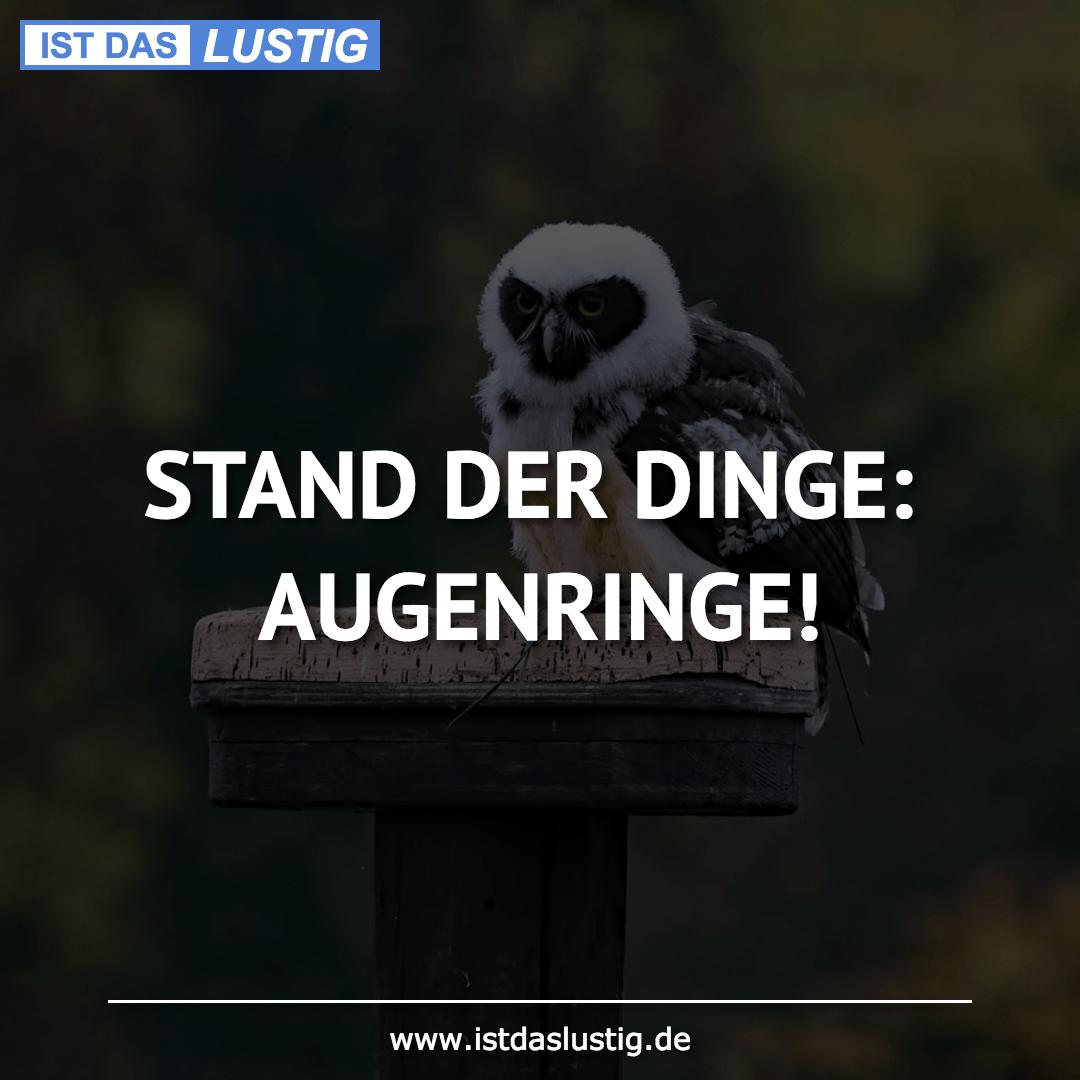 Lustiger BilderSpruch - STAND DER DINGE: AUGENRINGE!