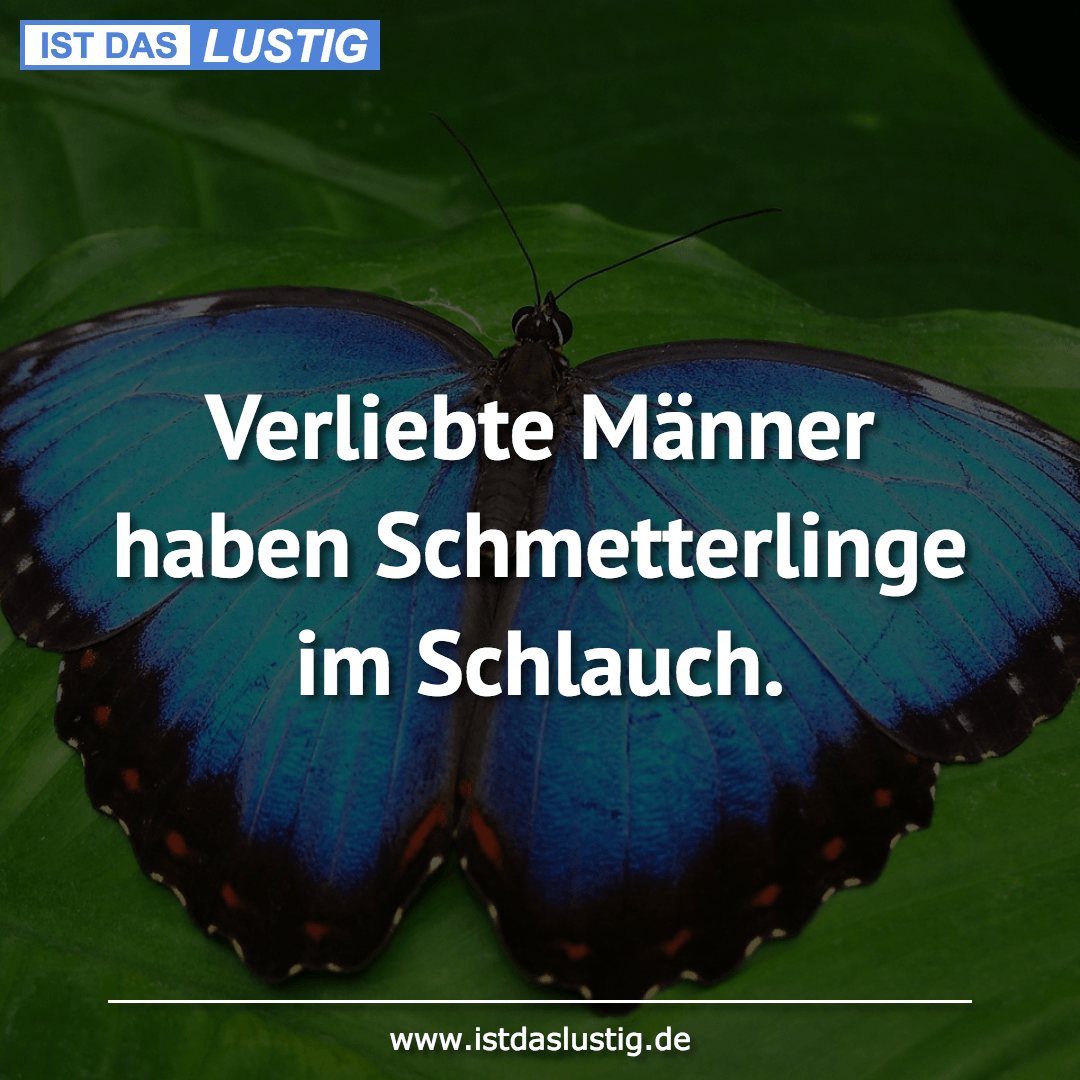 Lustiger BilderSpruch - Verliebte Männer haben Schmetterlinge im Schlauch.