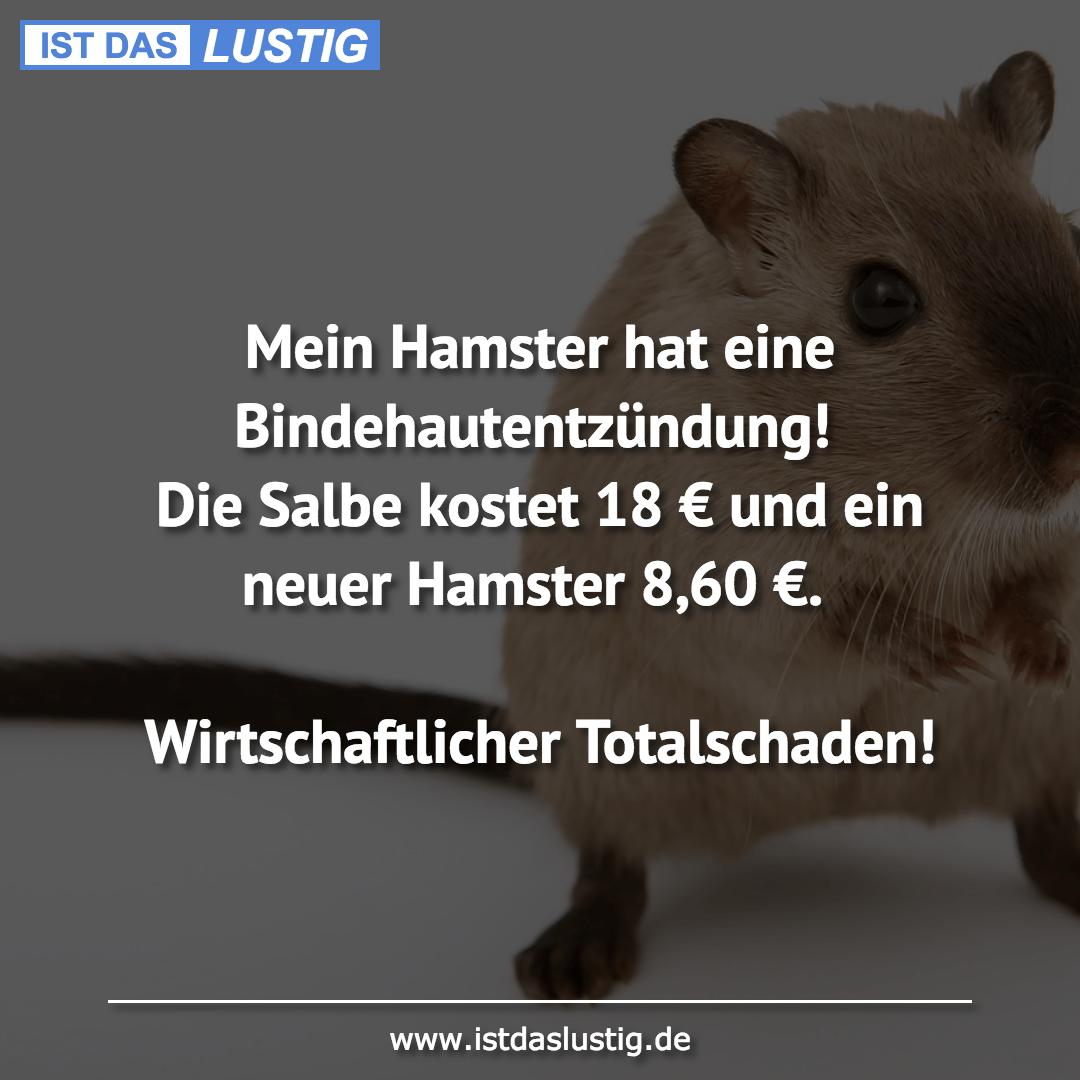 Lustiger BilderSpruch - Mein Hamster hat eine Bindehautentzündung! Die...