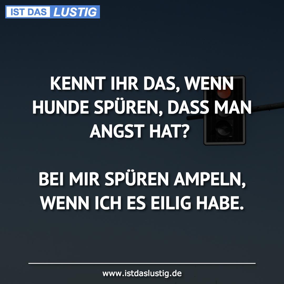 Lustiger BilderSpruch - KENNT IHR DAS, WENN HUNDE SPÜREN, DASS MAN...