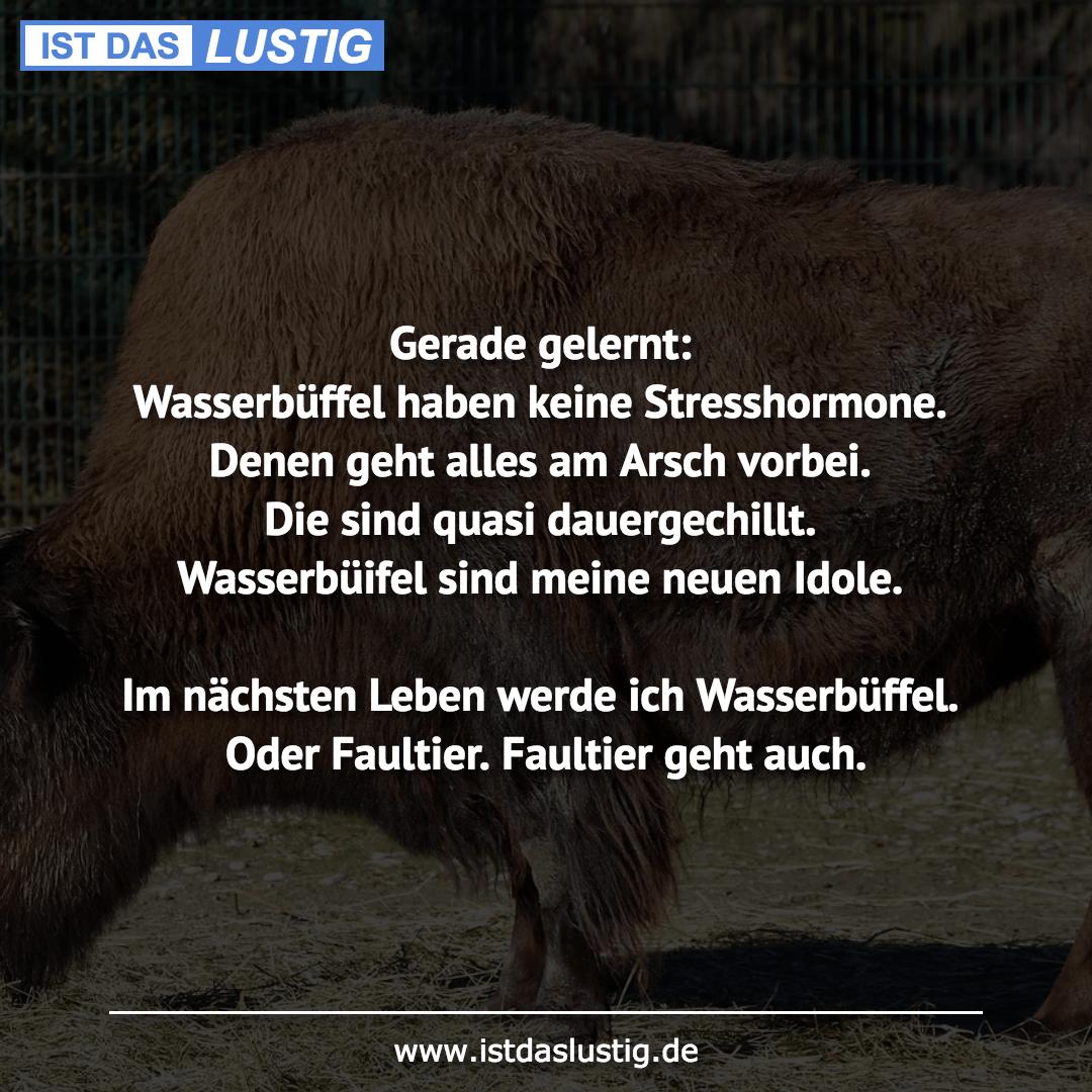 Lustiger BilderSpruch - Gerade gelernt: Wasserbüffel haben keine Stress...