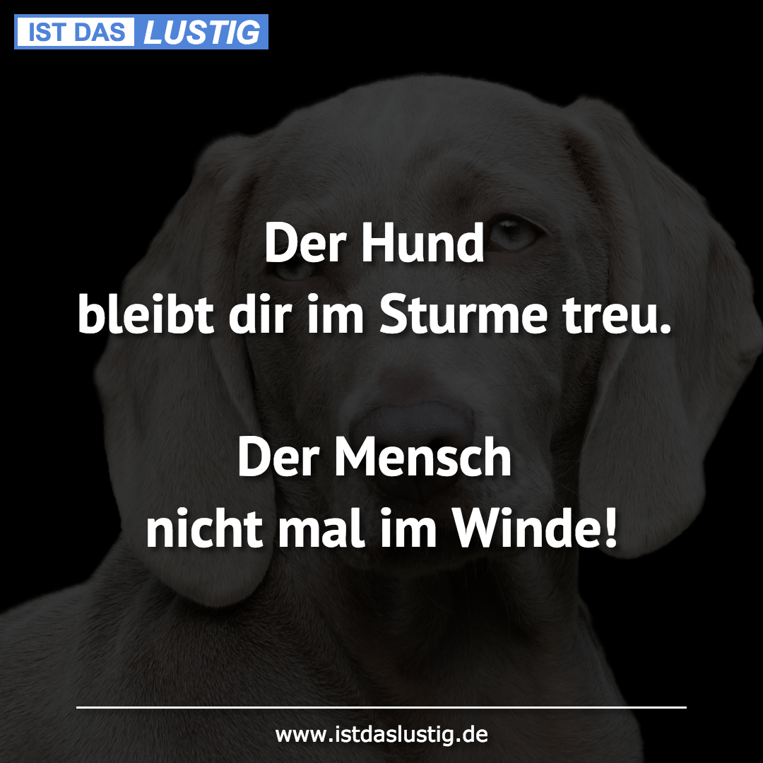 Lustiger BilderSpruch - Der Hund bleibt dir im Sturme treu.  Der...