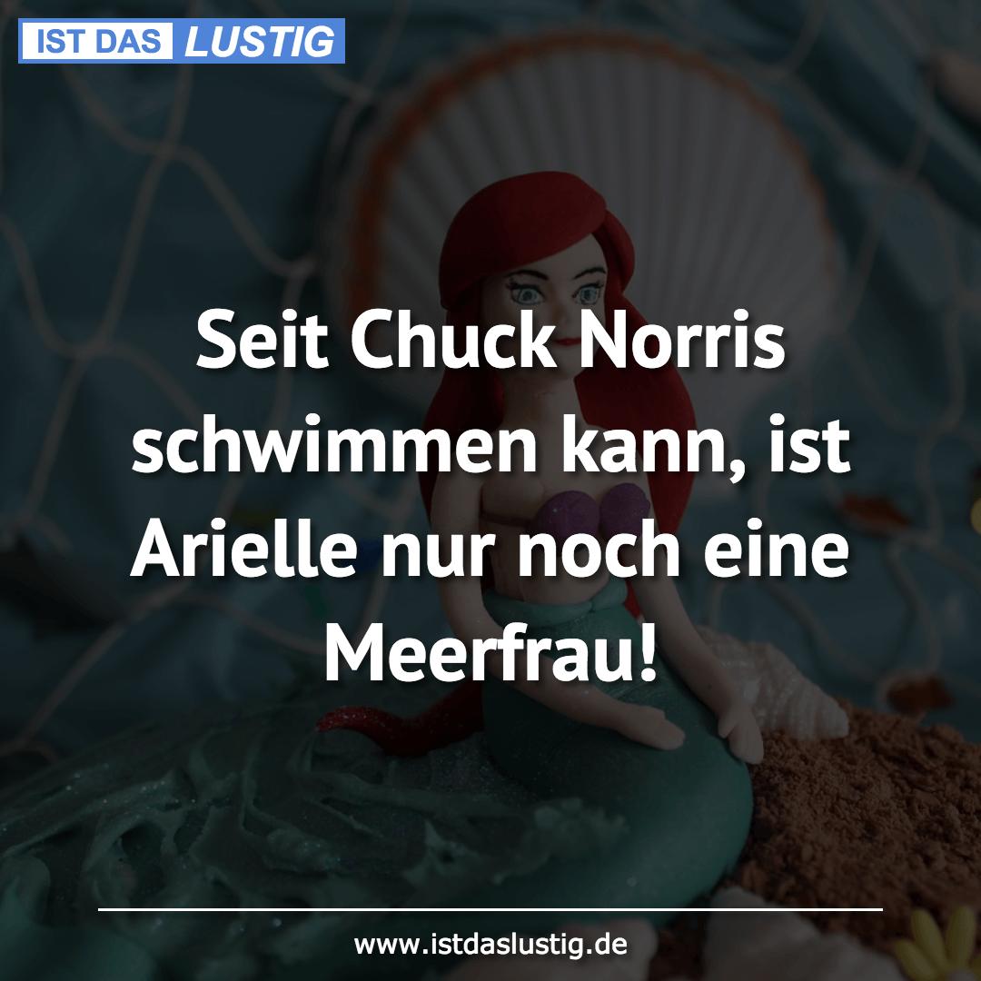 Lustiger BilderSpruch - Seit Chuck Norris schwimmen kann, ist Arielle...