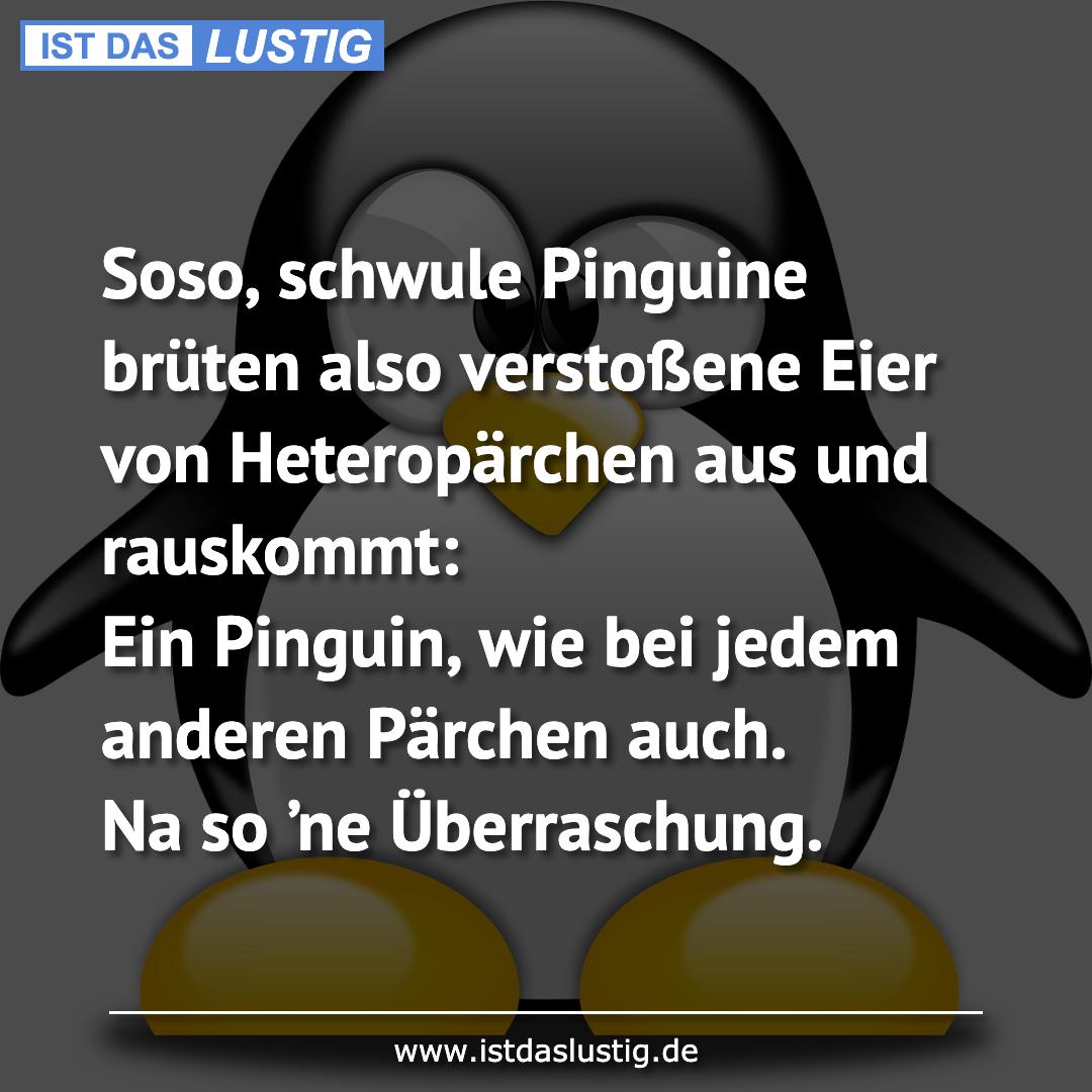 Lustiger BilderSpruch - Soso, schwule Pinguine brüten also verstoßene...
