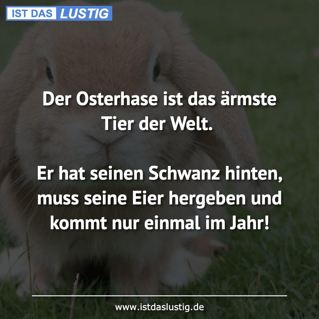 Lustiger BilderSpruch - Der Osterhase ist das ärmste Tier der Welt.  Er...