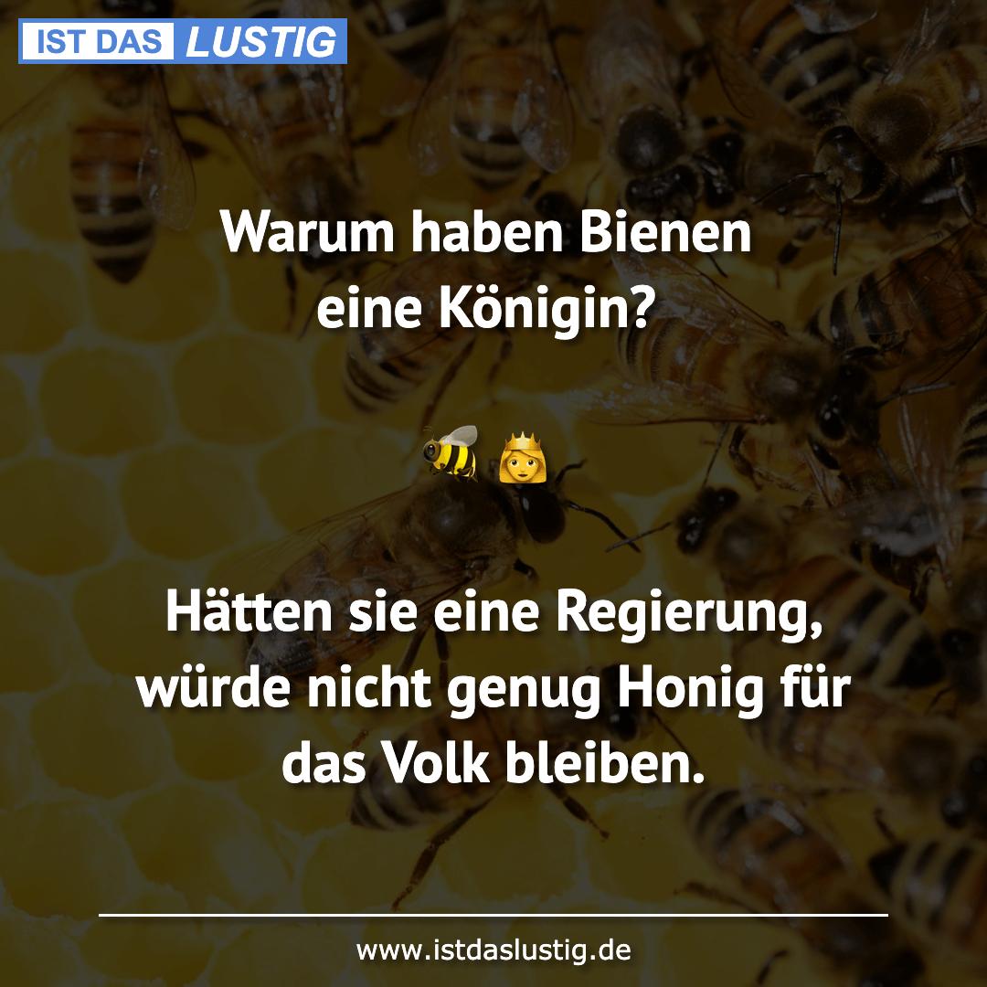 Lustiger BilderSpruch - Warum haben Bienen eine Königin?