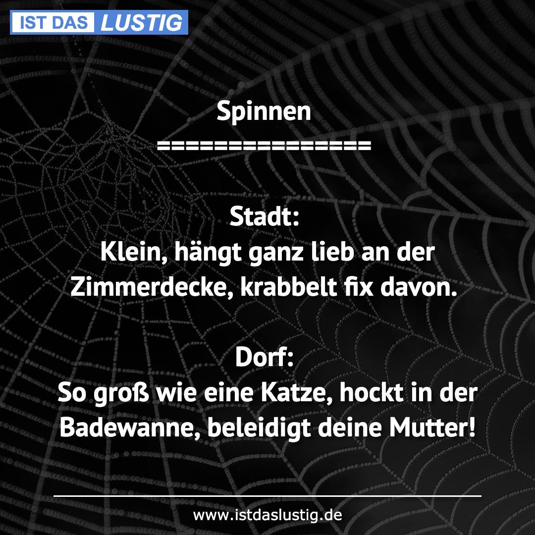 Lustiger BilderSpruch - Spinnen ===============  Stadt: Klein, hängt ga...