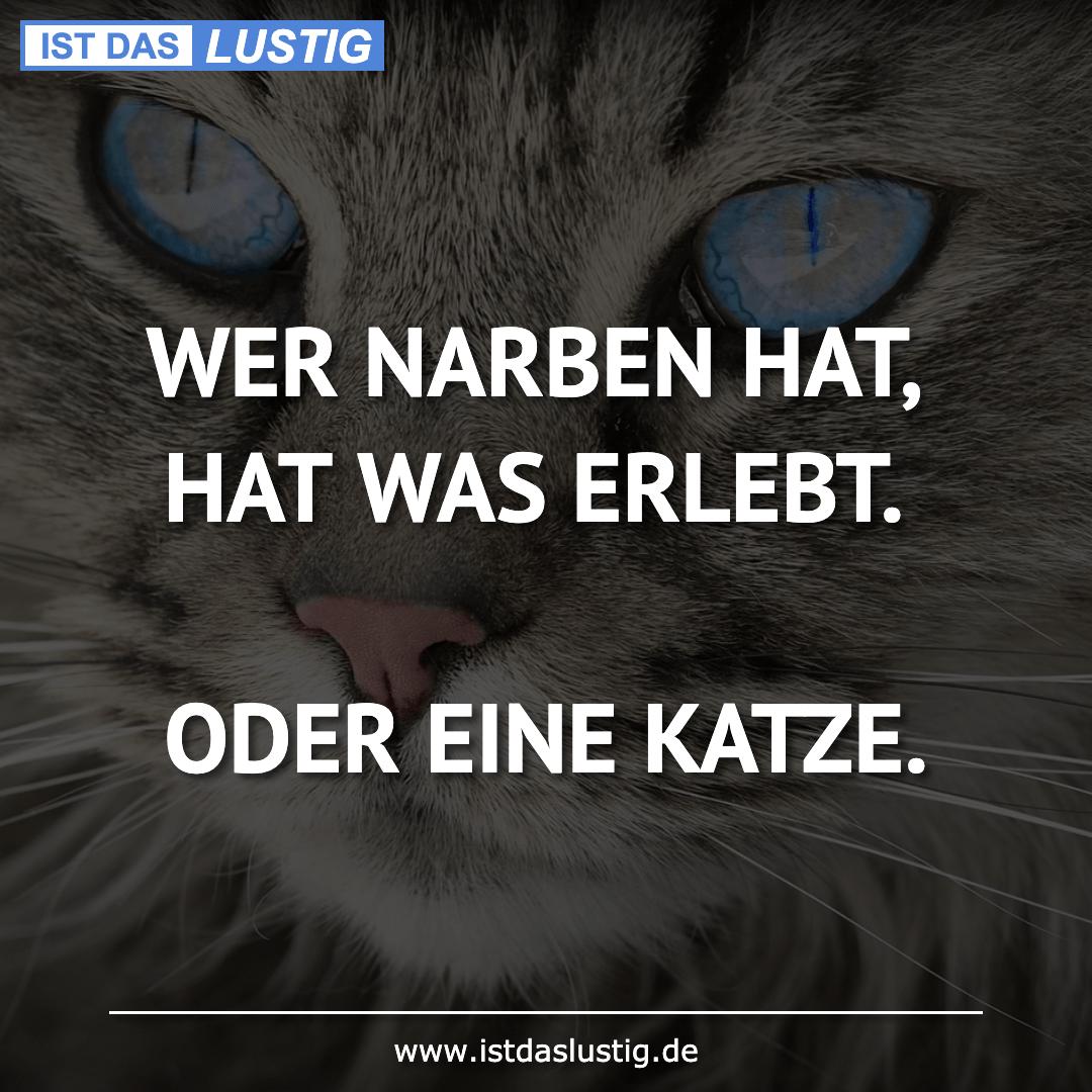 Lustiger BilderSpruch - WER NARBEN HAT, HAT WAS ERLEBT.  ODER EINE KATZE.