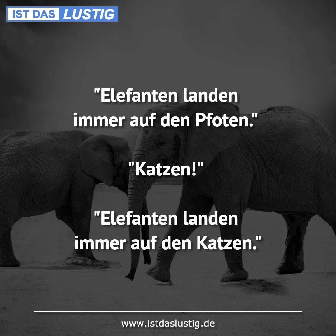 """Lustiger BilderSpruch - """"Elefanten landen immer auf den Pfoten.""""..."""