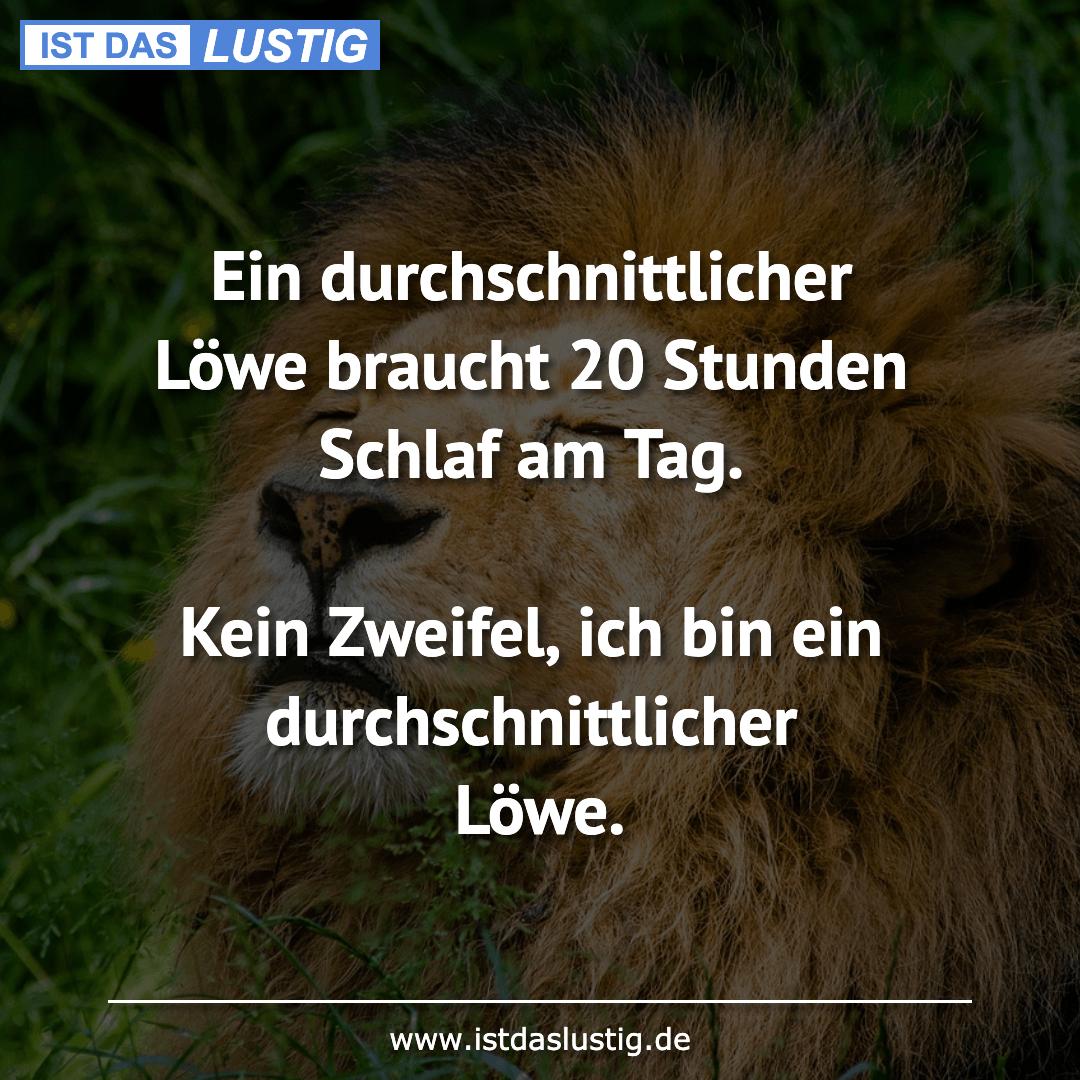 Lustiger BilderSpruch - Ein durchschnittlicher Löwe braucht 20 Stunden...