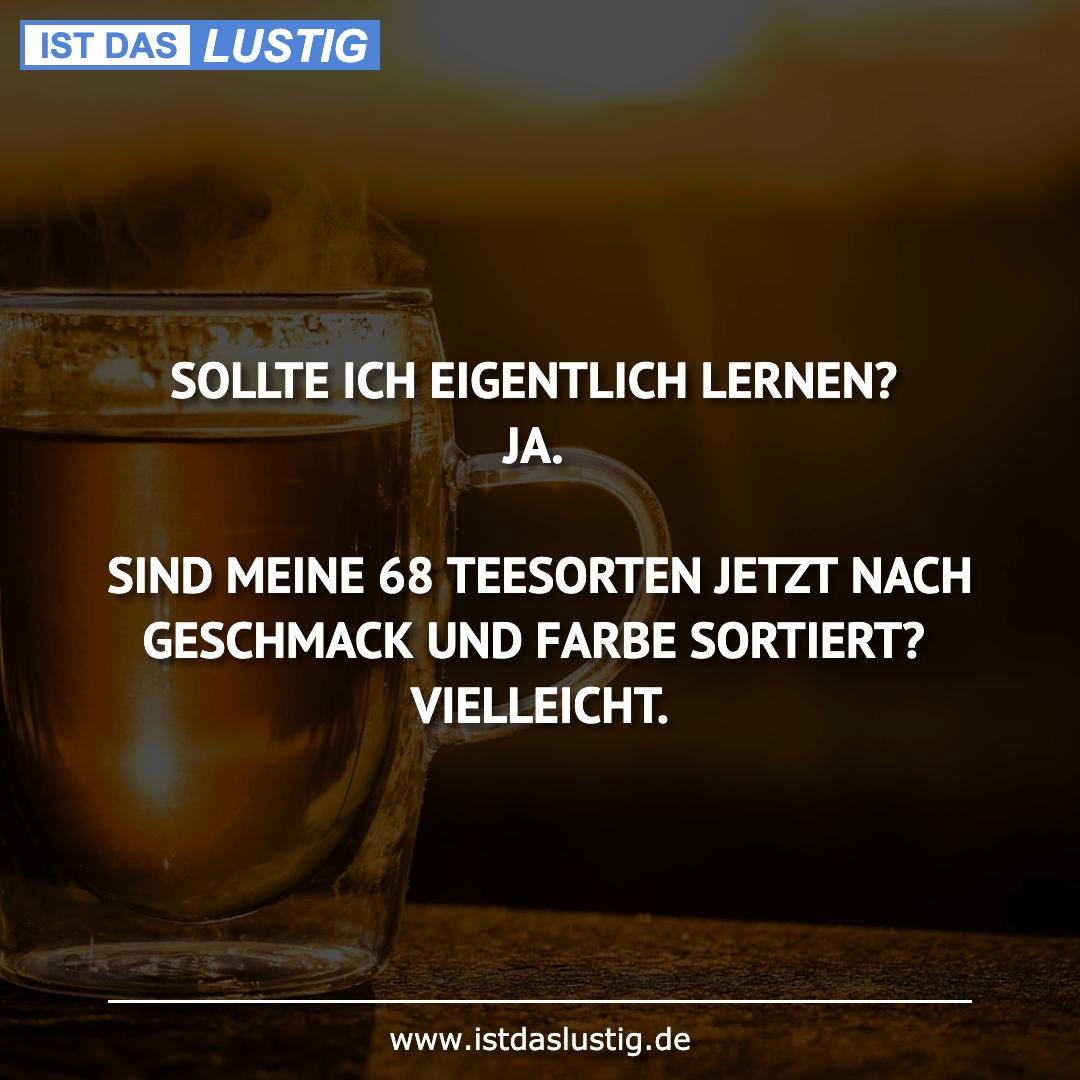 Lustiger BilderSpruch - SOLLTE ICH EIGENTLICH LERNEN? JA.  SIND MEINE...