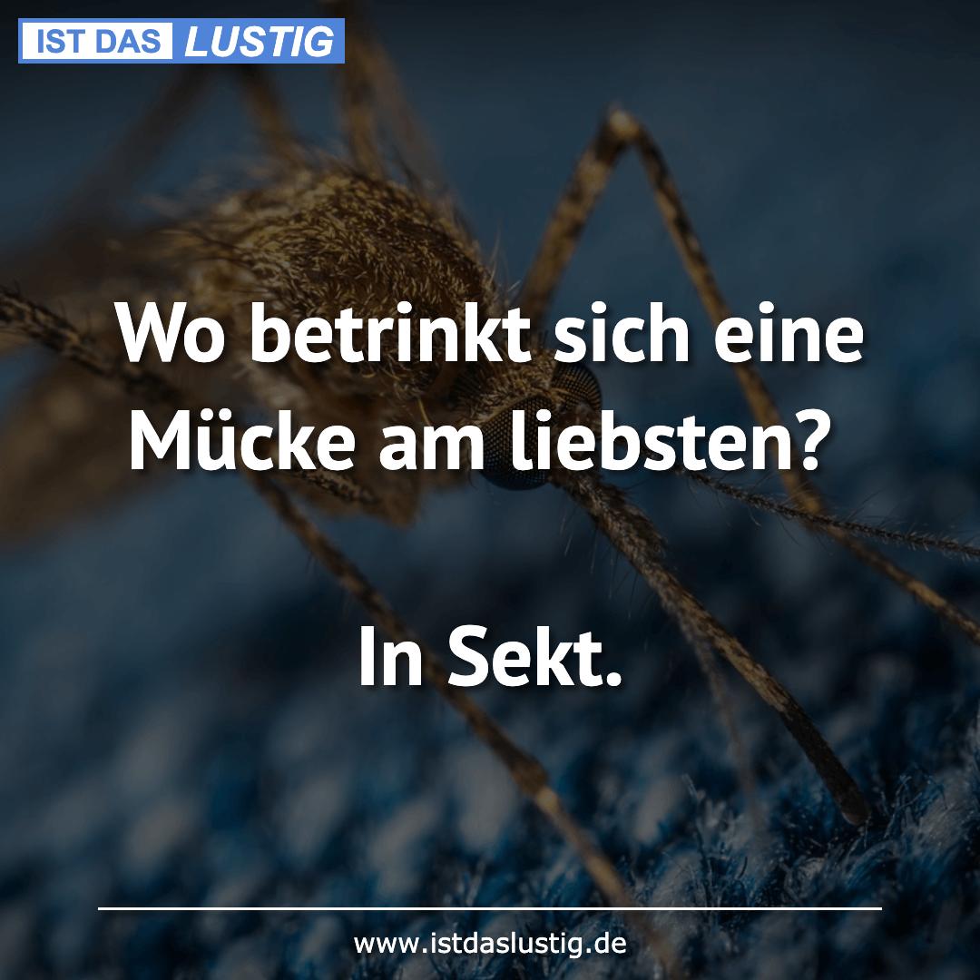 Lustiger BilderSpruch - Wo betrinkt sich eine Mücke am liebsten?  In Sekt.